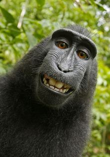 MONKEY-SELF-PORTRAIT.jpg