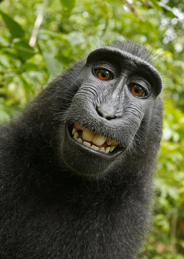 http://www.crimeandconsequences.com/crimblog/files/pictures/MONKEY-SELF-PORTRAIT.jpg